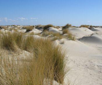 Duinen3-FotoEricWijnbeek